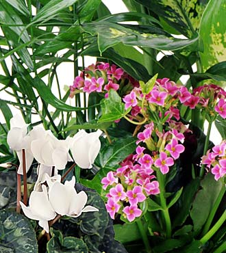 Designer's Choice Blooming and Green Plants by Rich Mar Florist