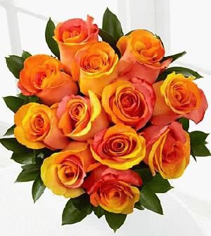 Dozen Mixed Fall Roses Wrapped by Rich Mar Florist